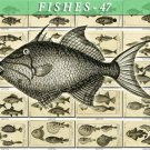 FISHES-47-bw 155 vintage print