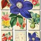 FLOWERS-2 222 vintage print