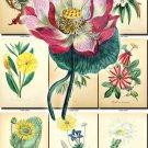 FLOWERS-30 63 vintage print
