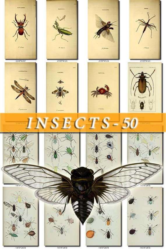 INSECTS-50 200 vintage print