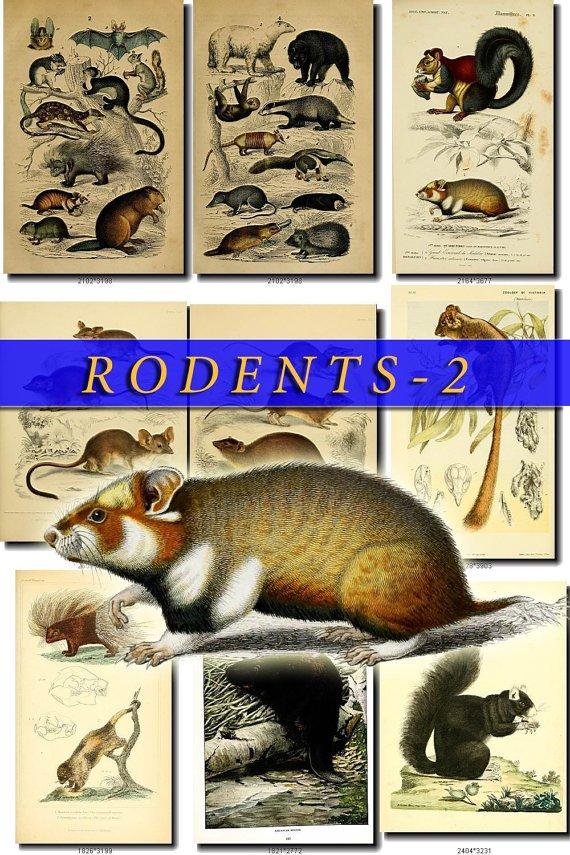 RODENTS-2 52 vintage print