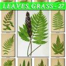 LEAVES GRASS-27 202 vintage print