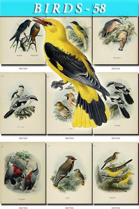 BIRDS-58 86 vintage print