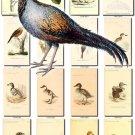 BIRDS-161 150 vintage print