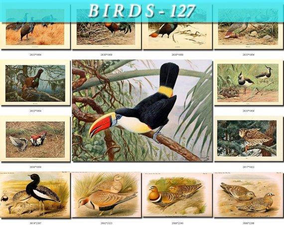 BIRDS-127 57 Pheasant Pigeons Owl Toucan Florican S, grouse Peacock