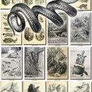 REPTILES & AMPHIBIAS-3-bw 172 black-, -white vintage print