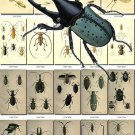 INSECTS-13-b1 223 vintage print