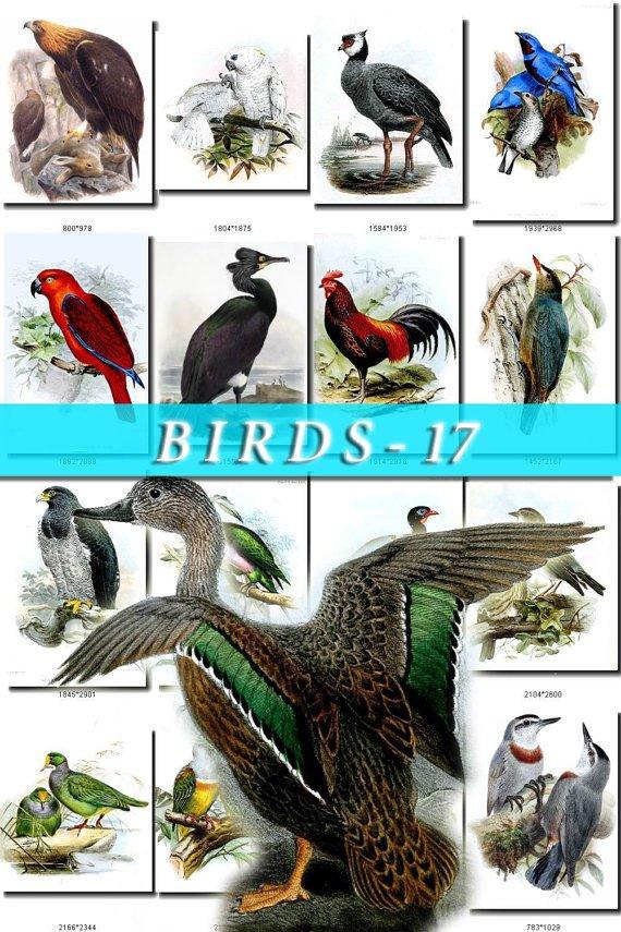 BIRDS-17 222 vintage print