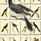 BIRDS-91 77 vintage print