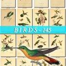 BIRDS-145 76 vintage print