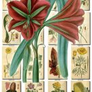 FLOWERS-14 247 vintage print