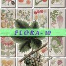 FLORA-10 320 vintage print