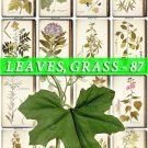 LEAVES GRASS-87 272 vintage print