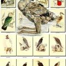 BIRDS-115 134 vintage print