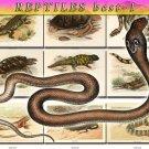 REPTILES BEST-1 & AMPHIBIAS images 114 vintage print