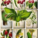 FLOWERS-37 69 vintage print