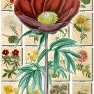 FLOWERS-68 252 vintage print