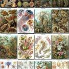 Amazing ANIMAL COLLAGES 105 vintage print