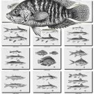 FISHES-49-bw 177 vintage print