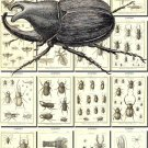 INSECTS-52-bw 237 vintage print