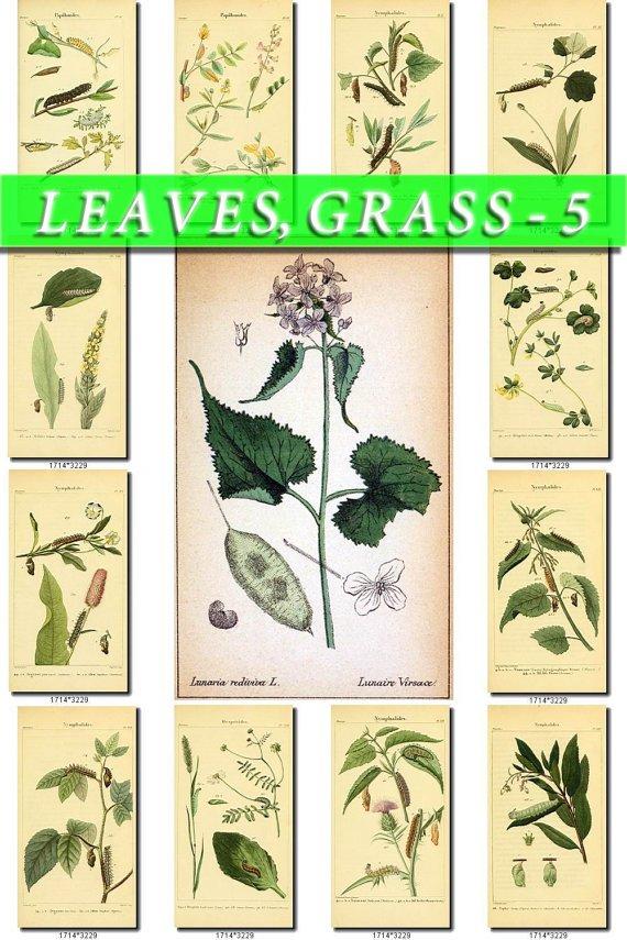 LEAVES GRASS-5 125 vintage print