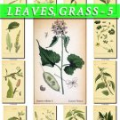 LEAVES GRASS-5 125 vintage print