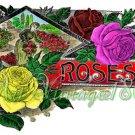 Collage FRAMES-01 Roses Strawberries Gooseberries instant Imges magnet bezel