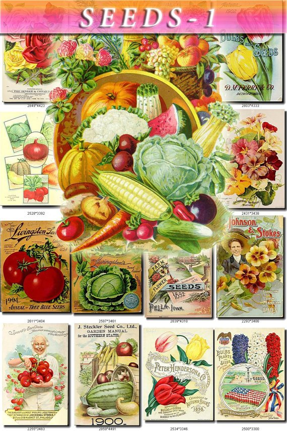 SEEDS-1 Catalogs Covers Collection with 77 vintage print