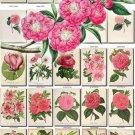 PINK-5 FLOWERS 230 vintage print