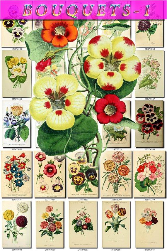 MULTI-COLORED-1 BOUQUETS flowers 180 vintage print