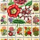 MULTI-COLORED-2 BOUQUETS flowers 200 vintage print
