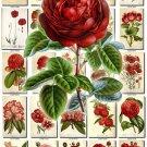 RED-4 FLOWERS 260 vintage print