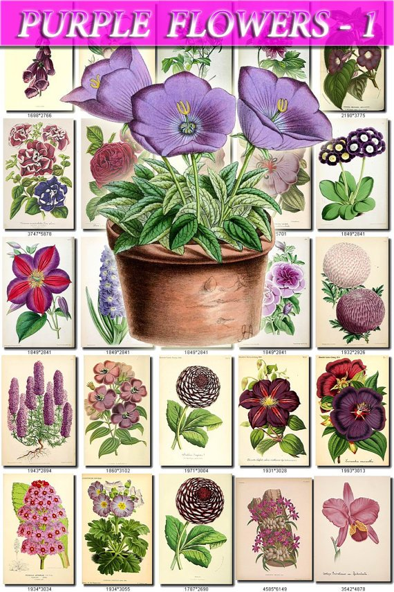 PURPLE-1 FLOWERS 280 vintage print