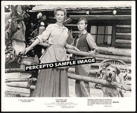 OLD YELLER -Orig '74 WALT DISNEY Movie Photo - TOMMY KIRK / DOROTHY McGUIRE