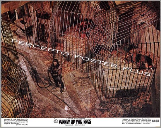 PLANET OF THE APES ~ '68 Sci-Fi Movie Photo ~ HUMAN ZOO