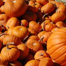 Leach Enterprises has WholeSale Punkins for Sale Online