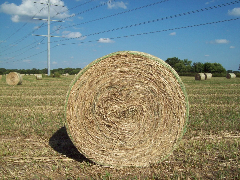 Leach Enterprises has Texas Haynet Hay for Sale Online