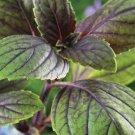 HEIRLOOM NON GMO Corsican Basil 100 seeds