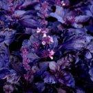 HEIRLOOM NON GMO Dark Opal Basil 100 seeds
