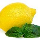 HEIRLOOM NON GMO Lettuce Leaf Basil 100 seeds