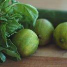 HEIRLOOM NON GMO Lime Basil 100 seeds