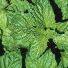 HEIRLOOM NON GMO Napoletano Basil 100 seeds
