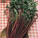 HEIRLOOM NON GMO Garnet Stem Chicory (Cichorium intybus) 250 seeds