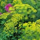 HEIRLOOM NON GMO Boquet Dill 100 seeds