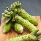 HEIRLOOM NON GMO Wasabi 50 seeds