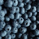 HEIRLOOM NON GMO Sharp Blueberry 50 seeds