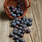 HEIRLOOM NON GMO Dry Land, Drought Resistant, Rocky Soil Blueberry 50 seeds