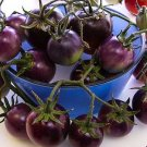HEIRLOOM NON GMO Baby Blue Tomato 25 seeds
