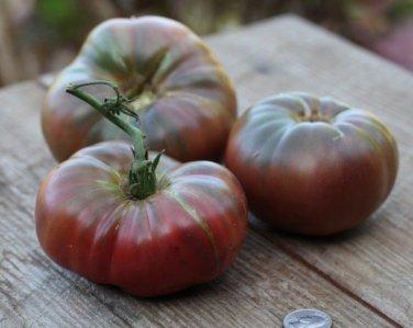 HEIRLOOM NON GMO Vorlon Belgium Purple Tomato 25 seeds