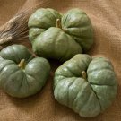 HEIRLOOM NON GMO Triamble Winter Squash/Pumpkin 15 seeds (Rare)